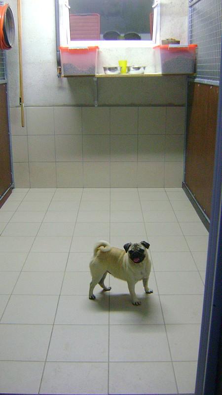 Pension canine : vue de l'intérieur d'un box