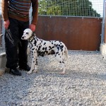 Pension canine : courette privative d'un box