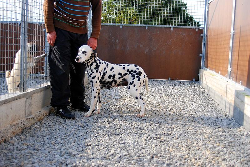 Pension canine : courette privative d'un box